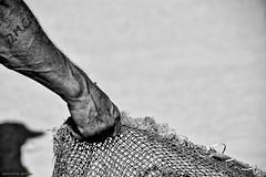 DSC_3046 (ahcravo gorim) Tags: xávega portugal mar mãos ahcravo gorim