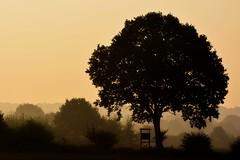 Morgennebel (simson60) Tags: morgennebel siluette baum felder fog outdoor schleswigholstein