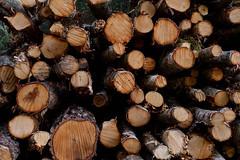 Woodpile (Mattias Lindgren) Tags: 50mmf18 nikond600 sweden yongnuo
