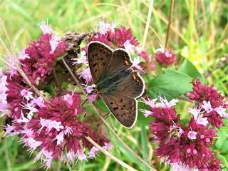 Butterfly 1439