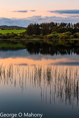 Ballyshunnuck Reflections....again! (George O Mahony) Tags: lake water sunset sky landscape ireland waterford cowaterford reeds