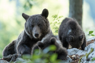 mummy with cubs