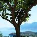 Tree over Epidaurus