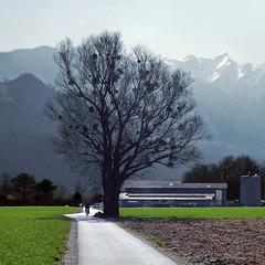 Baum und Misteln. Vaduz, Liechtenstein (pom.angers) Tags: panasonicdmctz10 liechtenstein march 2012 vaduz muhleholz tree cycle bicycle 100 150 200 300 400 500 600 5000 700 10000