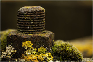 Macro Mondays - Rust - Nut and Bolt with Lichen (In Explore 12th Sept 2017)