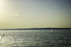 early birds (szlavid) Tags: balaton hungary lake water morning nikon d7000 nikkor 2485 landscape nature