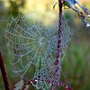 morning art (vivienne_strauss) Tags: cranberrymeadowtrail webs newhampshire
