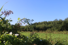 Tolkmicko, Warmia, Poland (LeszekZadlo) Tags: blue sky nature natureza naturaleza flowers field meadow agriculture summer green landscape landschaft paisaje pejzaż summertime warmia ermland polska poland polonia pologne polen europe eu ue
