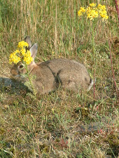 Camo-Bunny