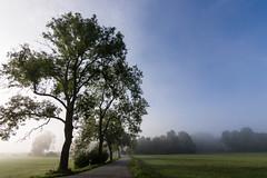 Nebel am Morgen (xdbooking) Tags: fog foggy dust nature naturelover naturelovers natureperfection natur naturestrikesback landscape landscapes bayern deinbayern visitbavaria artsbyxd xdarts moosburg deutschland nikondeutschland