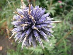Autumn Gardening (Mr. Happy Face - Peace :)) Tags: garden flower albertabound art207 flickrfriends hss floral