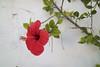 Chipiona (*Bárbara Franco) Tags: 1855mmf3556 canoneosm3