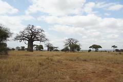 Tarangire, Tanzania, July 2017