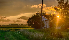 Green and Gold (tquist24) Tags: goshen hdr indiana nikon nikond5300 outdoor clouds evening farm fields flowers geotagged overgrown rural sky summer sunset tree trees wildflowers unitedstates