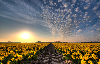 And then He split the sea of flowers..