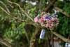 Buquê 028 (BlackDecor) Tags: buquê festas buquênoiva flores arranjos