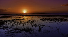 Lake Kissimmee Sunset (C. P. Ewing) Tags: sunset sky clouds landscape water lake blue orange pink yellow sundown seascape nature natural outoddors night light bright beautiful all florida