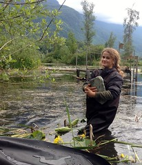 Hailey anchoring the liner (BC Wildlife Federation's WEP) Tags: outreach public yellowflagiris bcwf education wep wetlandseducationprogram invasive species control research wetland bcwildlifefederation cheamlake cheam rosedale chilliwack