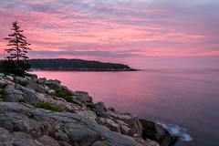 Sunrise Over Otter Cove (Geoff Livingston) Tags: acadia nationalpark dawn firstlight pink magenta sunrise rocks pinetree composition morning