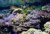 IMG_0722 (10Rosso) Tags: acqua acquario genova pesci pesce mare acquariodigenova aquarium genovaacquarium