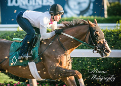Emma on Mott Trainee (EASY GOER) Tags: horseracing belmontpark horse racing sports equine thoroughbreds thoroughbred horses ny newyorkstate sportofkings canon 5d mark iii races 5dmarkiii