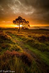 Early Autumn Sunrise (Explore 11/09/17) (Twiglet Images) Tags: sunrise sun rise lone tree peak district heather autumn peaks path cloud orange