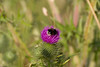 Bijen, landschap, IJdoorn polder, Durgerdam (CBP fotografie) Tags: bijen bees durgerdam amsterdam ijdoornpolder landschap landscape natuur nature holland noordholland northholland nederland netherlands
