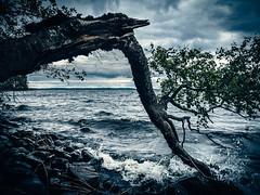 Päijänne (miemo) Tags: päijänne sysmä birch branch clouds em5mkii europe fallen finland lake nature olympus olympus1240mmf28 omd rocks shore sky storm summer tree waves windy päijännetavastia fi