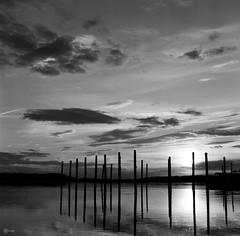Peaceful Poles (BackEastPhoto) Tags: yashica yashicamat124g tlr 6x6 120film mediumformat monochrome blackwhite fujifilm fujifilmneopanacros100 neopan backtofilm film poles stonybrookharbor longisland newyork sunset sunsetlight seascape