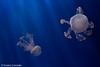IMG_0715 (10Rosso) Tags: acqua acquario genova pesci pesce mare acquariodigenova aquarium genovaacquarium