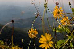 MST trail 2 (joehoeper) Tags: northcarolina blueridgemountains 828 avl pisgahnationalforest pisgah mountainstoseatrail hike appalachianmountains