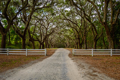 Wormsloe Plantation (Brandon Westerman WNP) Tags: wormsloe plantation state historic site savannah georgia history south southern fence live oak tree road flickr nikon d3200
