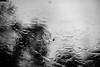 Rain (chrism229) Tags: olympusom2n zuiko50mmf14 fujineopan400 rodinal hasselbladx1 film blackandwhite monochrome 35mm