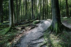 Jasmund (hansekiki ) Tags: rügen jasmund nationalpark wald baum bäume ostsee balticsea canon 5dmarkiii landschaften