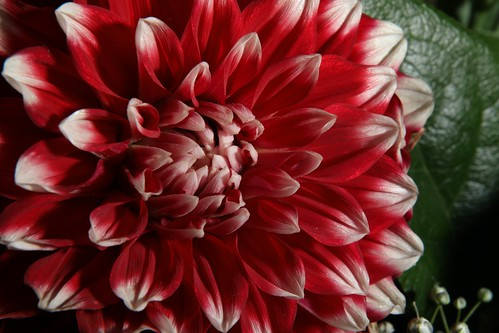 20170919 008 Baarlo Macro bloem