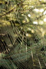 A Sticky Beauty 08152017 (Orange Barn) Tags: sticky spiderweb web tree sunlight strands 117picturesin2017
