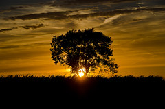 Photo of Swarby Sunset 6