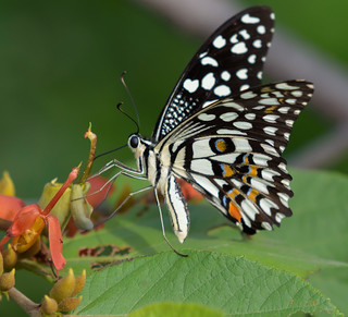 Butterfly at ABP Gurgaon