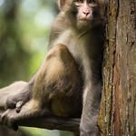 Macaque! thumbnail