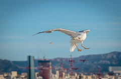 Gabbiano // Seagull (Christian Papagni   Photography) Tags: giallo gabbiano seagull bird marsiglia