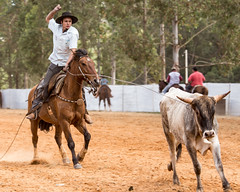 Prova do laço comprido (Ars Clicandi) Tags: paraná brasil br brazil parana jaboti prova do laço comprido peao peão boiadero boiadeiro cowboy