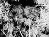 Experimentation 34 (Rossdxvx) Tags: experimental experimentation eerie texture textured textures texturized trees tree abstract art surreal surrealism silhouette shadows blackandwhite dark grim gloomy 2017 overlay overexposed outdoor outdoors otherworldly grimtrees hellish hell horror gritty minimalism monochrome lofi blur