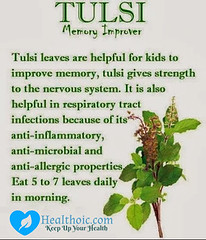 tulsi-benefits-healthoic (healthoic) Tags: tulsi health benefits healthoic flickrhealth