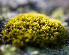 Moss (Ashild Andrea) Tags: blefjell mountain outdoors autumn fjell moss lichen heather lyng mose myr skog