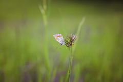 Metulj (Gorupka) Tags: kras detajl kraškagmajna pomlad
