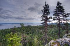Koli - Finland (Sami Niemeläinen (instagram: santtujns)) Tags: koli suomi finland maisema landscape lieksa pielinen luonto nature metsä forest hiking trekking järvi lake pohjois karjala north carelia kansallispuisto national park