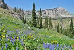 Teton Crest Trail, Grand Teton National Park (wldrns) Tags: tetoncresttrail grandtetonnationalpark granitecanyon wildflowers backpacking wyoming