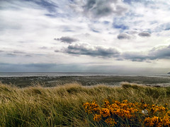 oceanview (sean and nina) Tags: newcstle codown ireland landscape nature ocean mournes mountains clouds sky co county irish sea green grass gorse shrubs plants flowers natural country side coast eire eu europe european