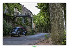 WHO'S GONNA DRIVE YOU HOME ? (régisa) Tags: old car vieille voiture herisson arbre tree road route alignement thecars