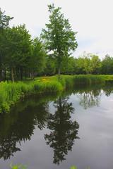 Reflection of a tree (pegase1972) Tags: reflection tree arbre pond québec quebec qc canada montérégie monteregie